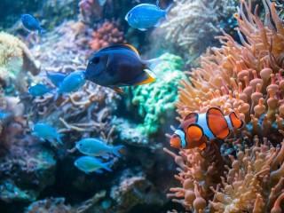 croque-ton-poisson-800x600-1604