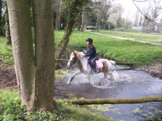 decouverte-poney-afgand-454