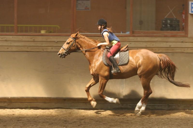 decouverte-equitation-484